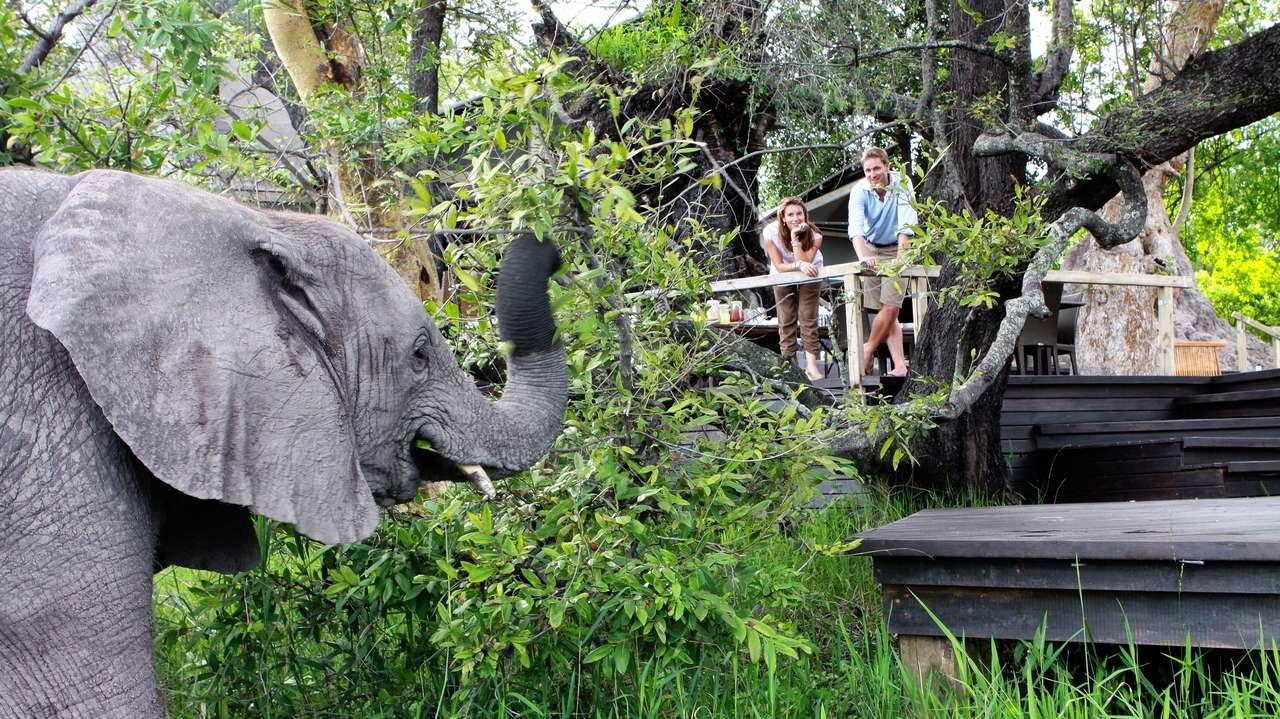 Elefant Abu Camp Okavango Delta