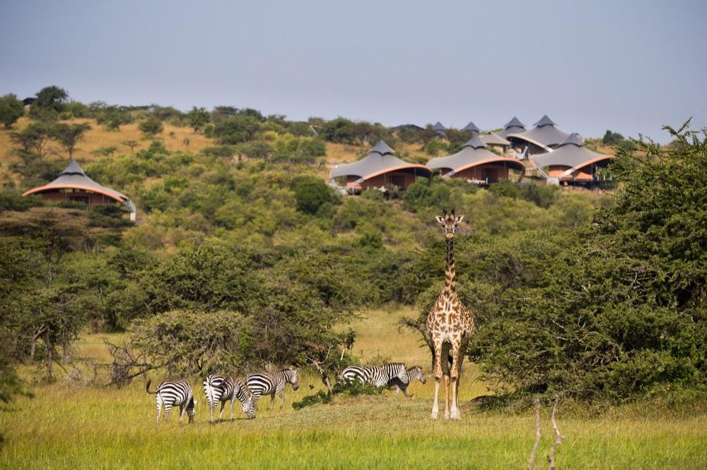 Wilde Tiere vor dem Mahali Mzuri
