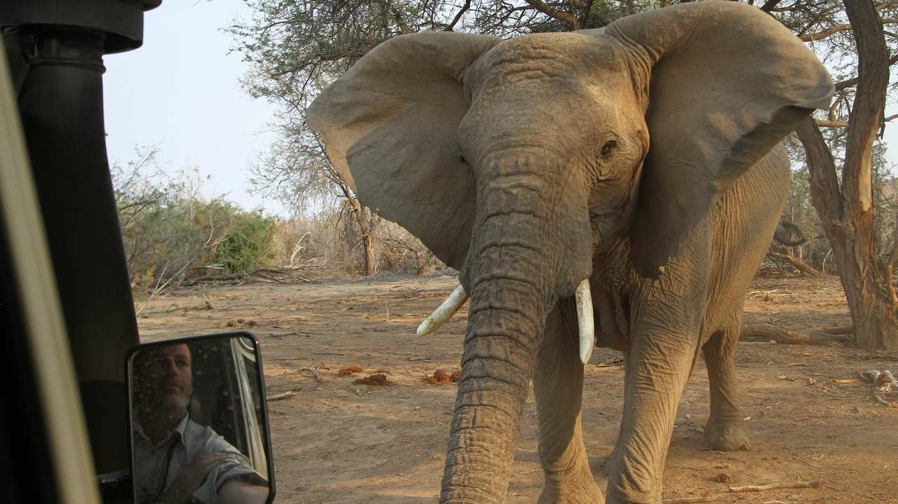 Elefant in Damaraland Namibia