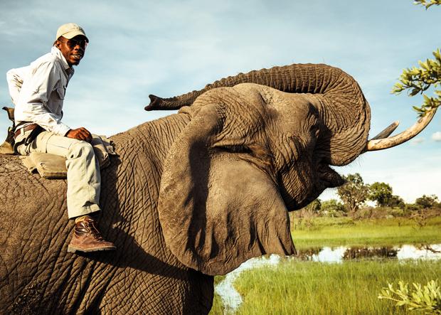 Elefantenreiten Safari