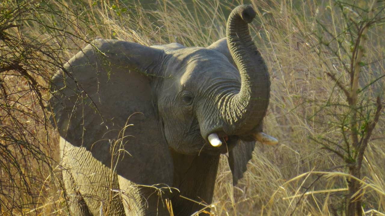 Elefant im Chad Nationalpark